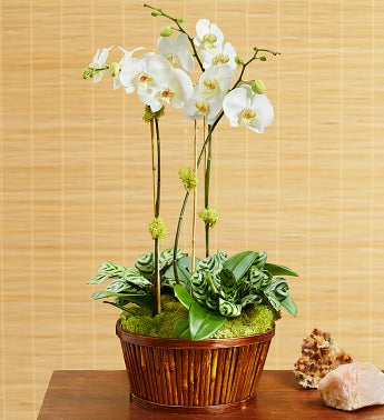 White Orchid Bamboo Garden for Sympathy