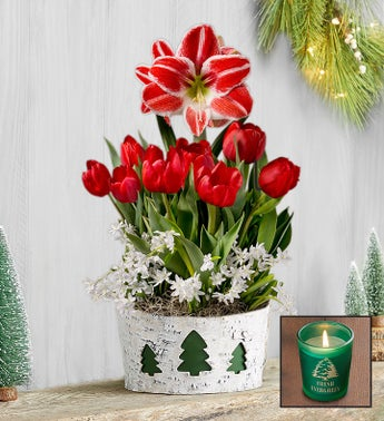 Holiday Charm Bulb Garden  Free Candle