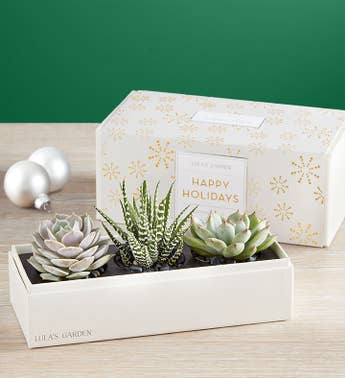 Lulas Holiday Succulents