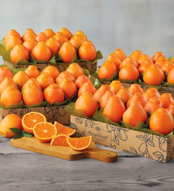 Cushman39s174 Florida HoneyBells - Four Trays